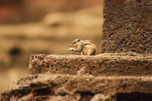 Squirrel, Cute, Small, Wildlife, Wild, Animal, Brown