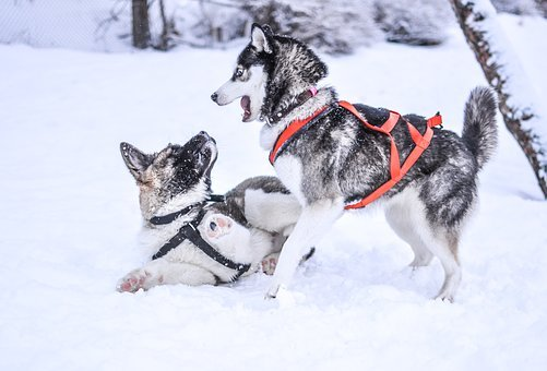 Winter, Snow, Dogs, Pet, Animal, Cute, White, Cold