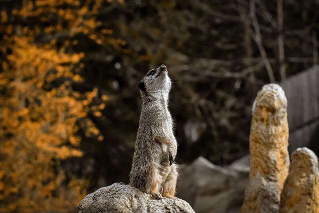 Meerkat, Animal, Nature, Zoo, Small, Fur, Cute, Mammal