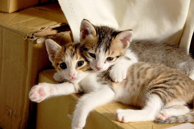 Small Cat, Cuteness, Sleeping Their Palate