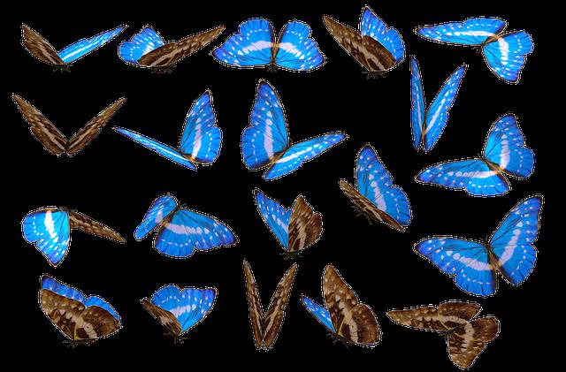 Butterfly, Unique, No Background, Nature, Cut, Cutout