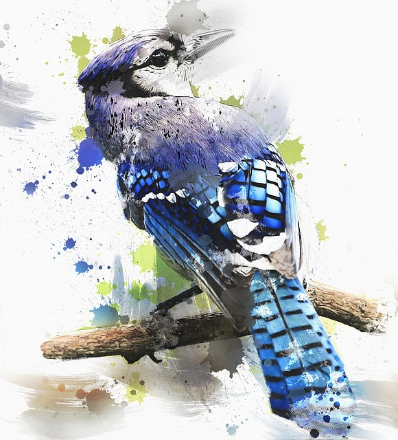 Bird, Blue, Cristata, Cyanocitta, Jay, Animals, Fauna