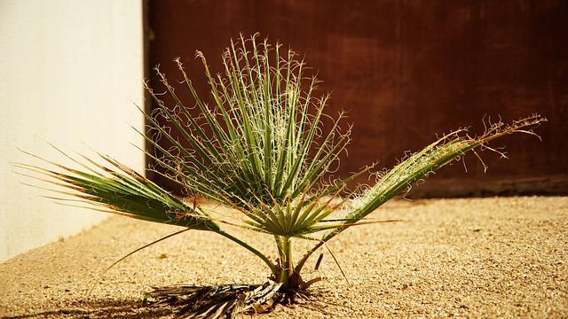 Plant, Seedling, Cycads