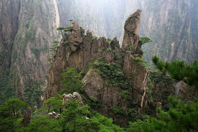 China, Huangshan, Cypress, Jun Rock, Trees