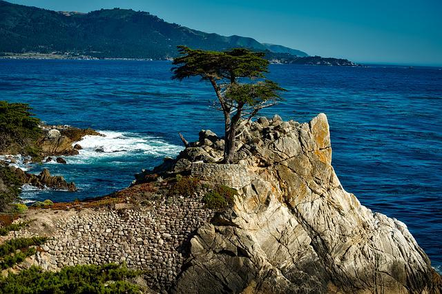 Lone, Isolated, Cypress Tree, Sea, Ocean, Rock, Rocky