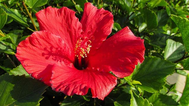 Cyprus, Protaras, Garden, Flower