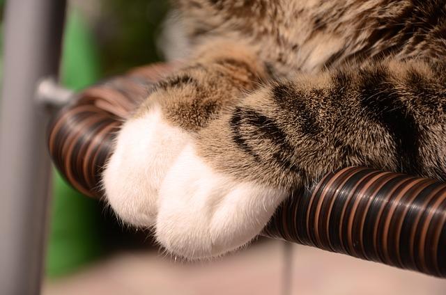 Kitten, Cat, Feet, Animal, Futrzak, Pet, Dachowiec