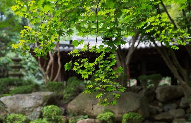 Korea National, Daegu, Gyeongju, Travel, Maple, Tree