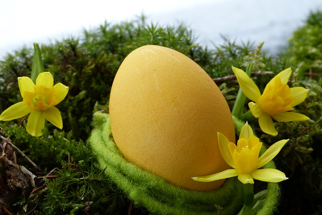 Easter Egg, Yellow, Daffodils, Snow, Moss, Spring