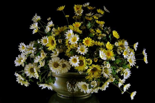 Flowers, Daisies, Petals, Margaret, Nature, Summer