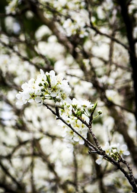 Flower, Daisy, Blossom, Blooming
