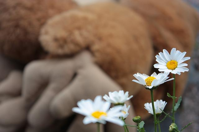 Daisy, Flower, White, Yellow, Nature, Summer, Clean