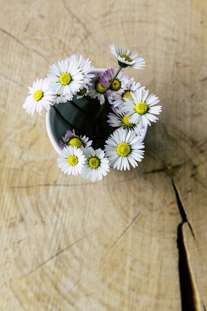 Daisy, Vase, Close, Flowers, Deco, Wildflowers, Table