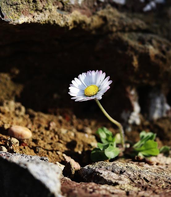 Daisy, Freedom, Nature, Spring, Summer, Plant, Masonry