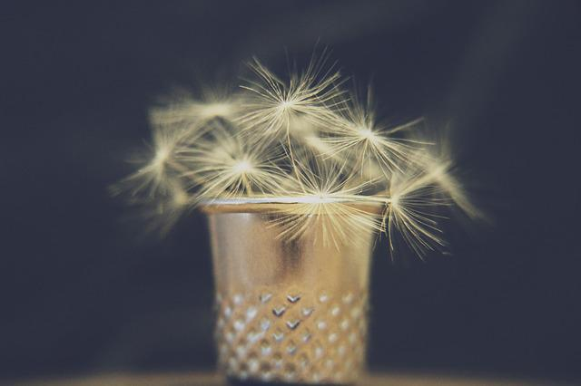 Dandelion, Thimble, Vase, Bouquet, Blow, Wish You