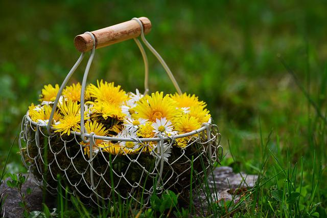 Dandelion, Daisy, Flowers, Flower Basket