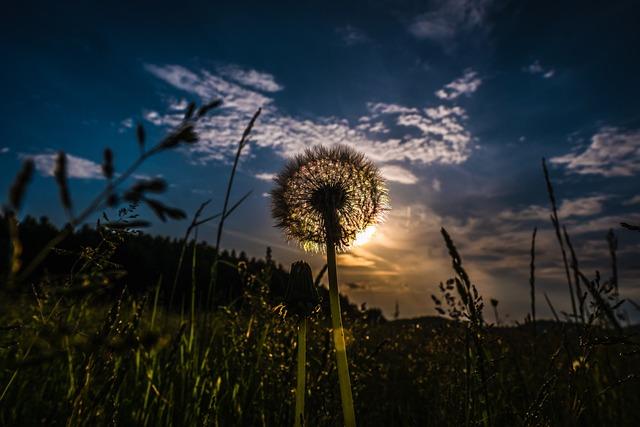 Sky, Nature, Grass, Landscape, Plant, Dandelion