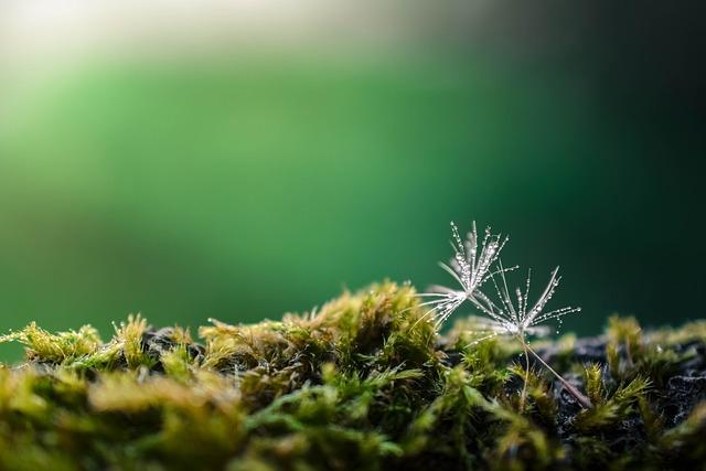 Dandelion, Green, Nature, Flower, Summer, Natural