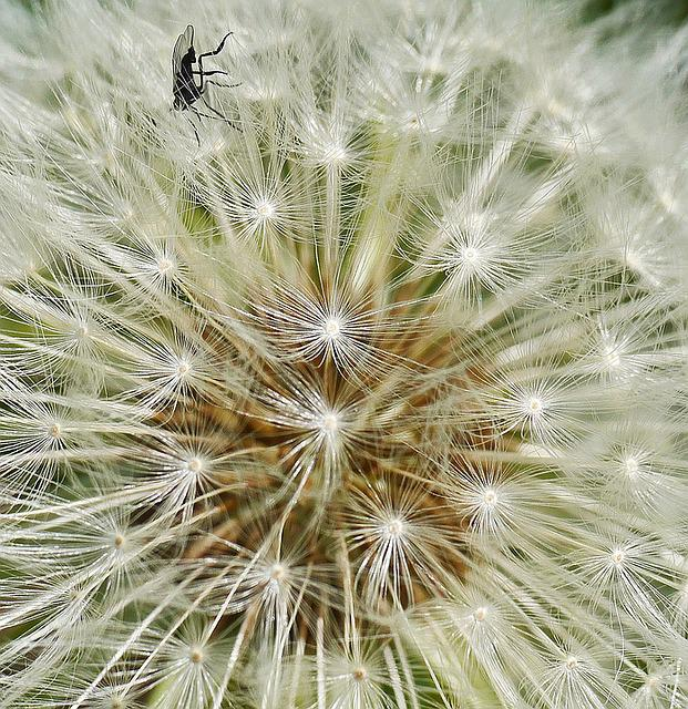 Dandelion, Fly, Seeds Was, Nature, Flower, Seeds