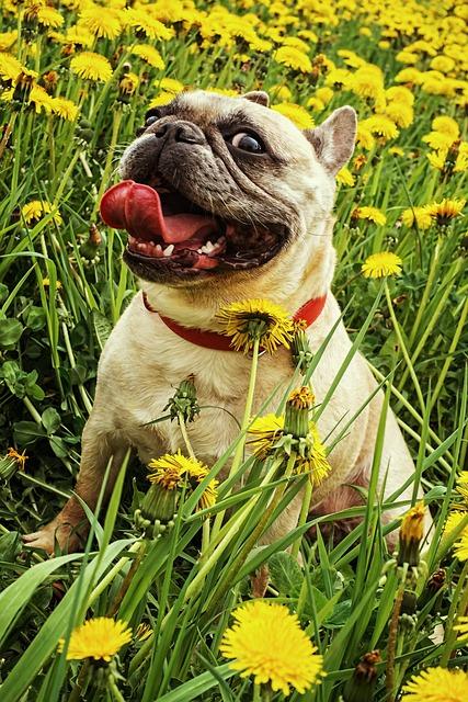 Gerda, Dandelion, Nature, Greens, Yellow, Living Nature
