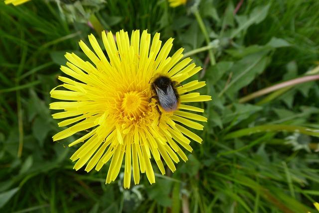 Nature, Grass, Plant, Summer, Flower, Dandelion, Yellow