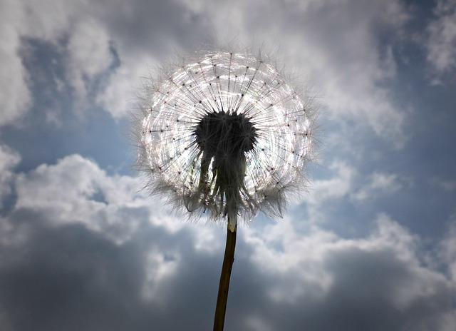 Clouds, Cloudy, Dandelion, Dandelion Seed, Silhouette