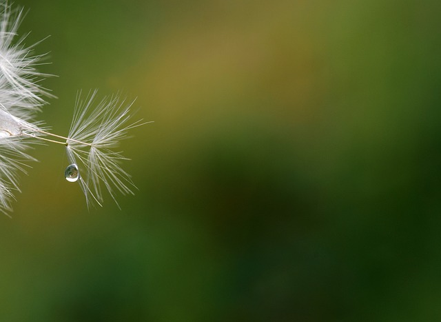 Dandelion, Seeds, Close, Nature, Dandelion Seeds