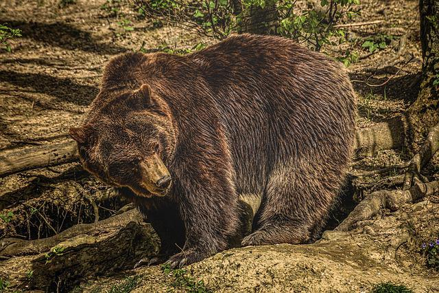 Bear, Brown Bear, Nature, Fur, Forest, Dangerous