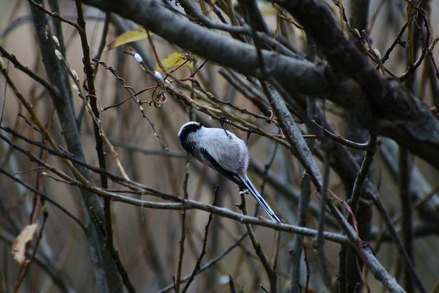 Animal, Forest, Wood, Twigs, Dangling, 木芽, Beak, Bird