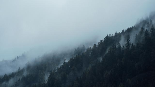 Conifers, Dark, Fir Trees, Fog, Foggy, Forest, Hazy