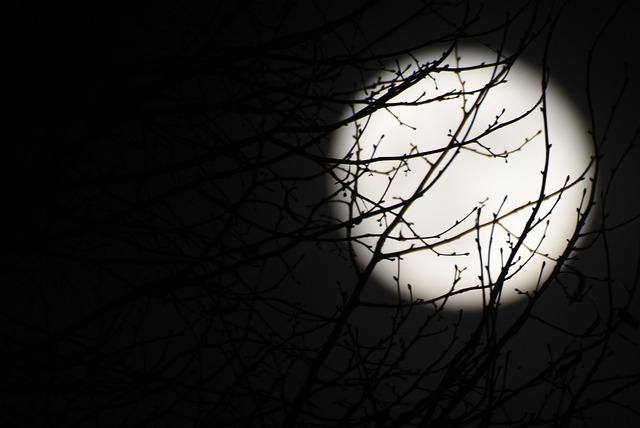 Moon, Full Moon, Night, Dark, Black, Branches