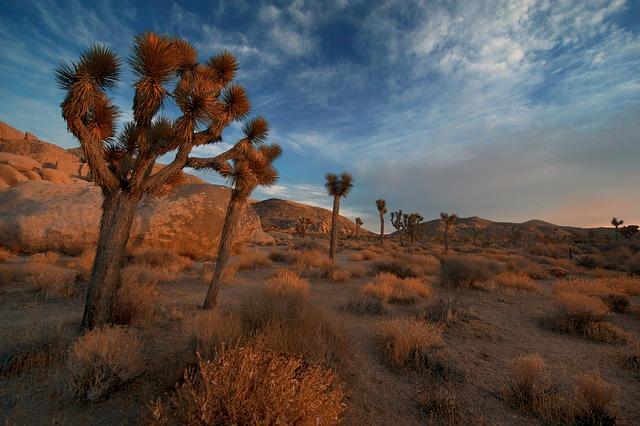 Arid, Barren, Boulders, Bushes, Cactus, Dawn, Daylight