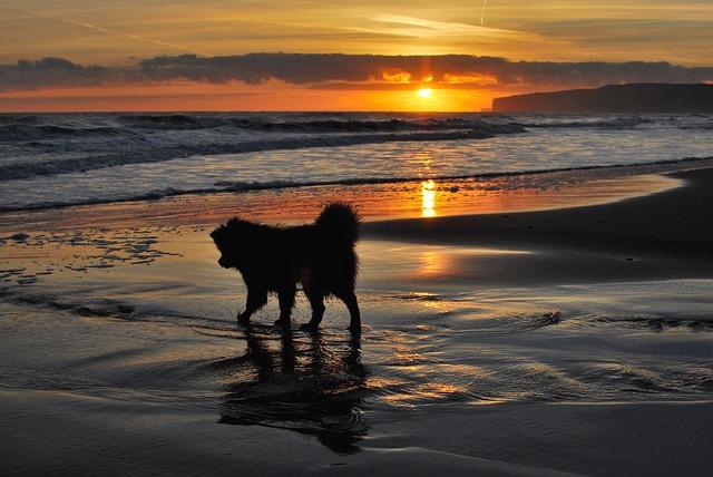 Sunrise, Sunset, Sea, Water, Dusk, Dawn, Beach, Dog