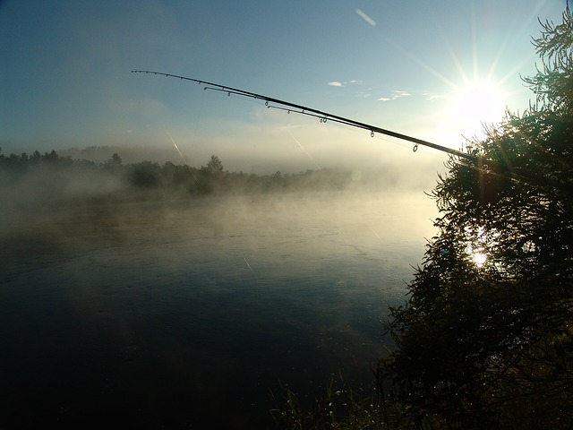 Fishing, Dawn, Island, Drava, Nature