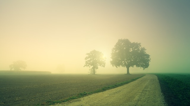 Dawn, Trees, Away, Fog, Landscape, Nature, Field