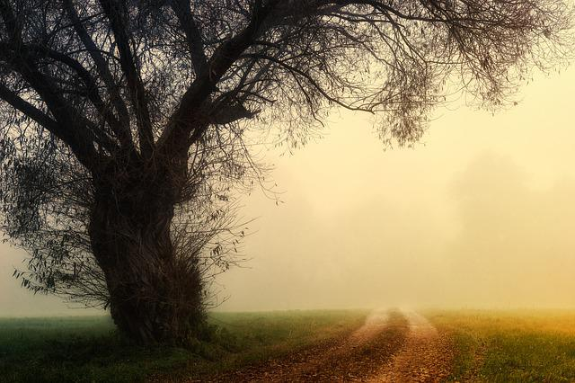 Tree, Landscape, Fog, Nature, Dawn, Foggy, Aesthetic