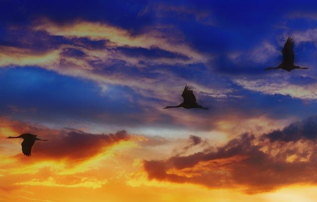 Migratory Birds, Sunset, Sky, Dawn, Dusk, Evening
