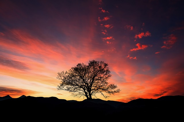 Sunset, Dawn, Tree, Dusk