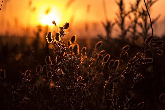 Silhouette, Plant, Sunset, Sunrise, Dawn, Evening