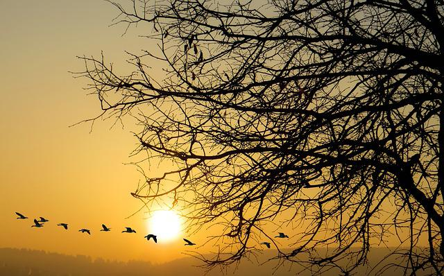 Nature, Dawn, Sunset, Sun, Tree, Sunrise, Geese, Fly