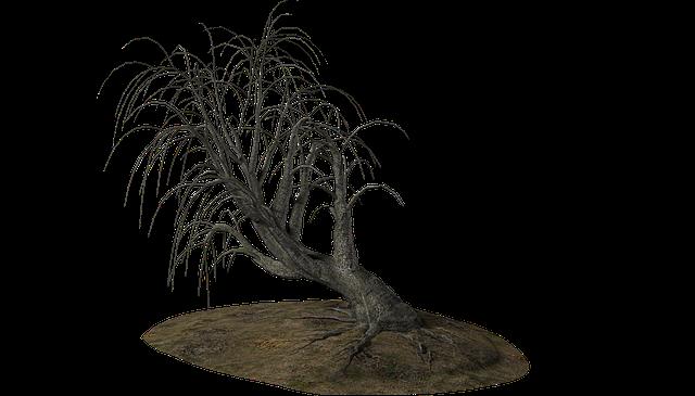 Tree, Dead Tree, Winter, Branch, Branches, Dead, Nature