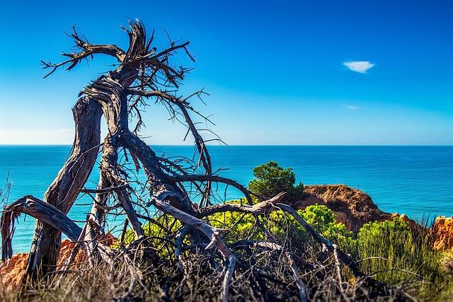 Sea, Tree, Dead, Nature, Sky, Seashore, Water