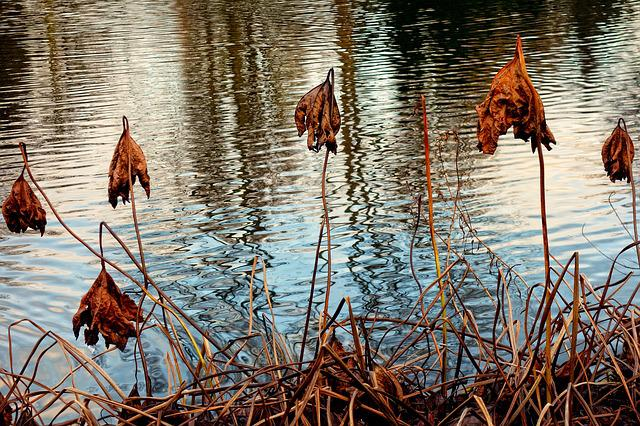 Dead Plants, Withered, Dried, Faded, Autumn Colors