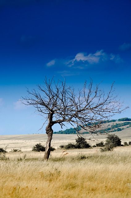Wood, Nature, Sheer, Drought, Dead Tree, Decay
