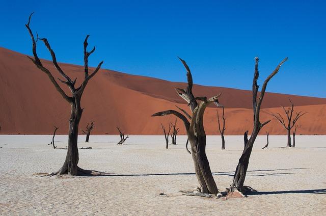 Deadvlei, Namibia, Desert, Dry, Tree