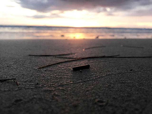 Phuket Sea, Beach, Deadwood