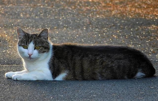 Cat, Mieze, Cute, Animal, Tiger Cat, Sweet, Dear