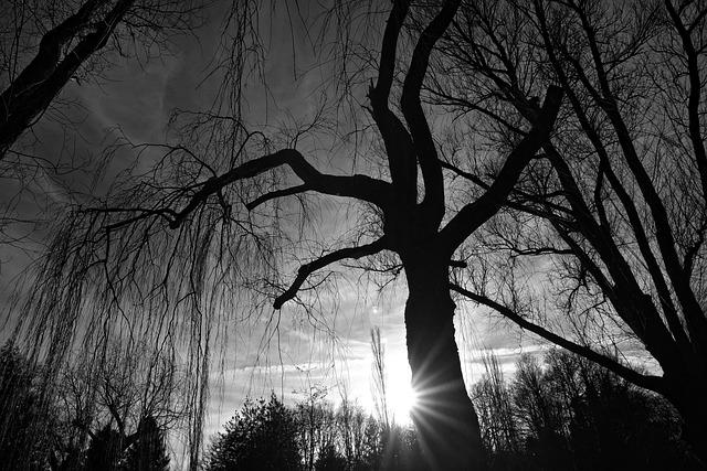 Tree, Trunk, Branch, Bare Tree, Winter Tree, Deciduous