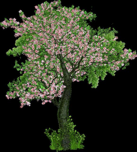 Tree, Deciduous Tree, Flowers, Grass, Digital Art