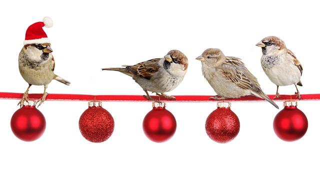 Sparrows, Christmas, Christmas Time, Deco, Advent
